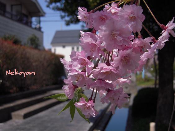 blog0904yoga5.JPG