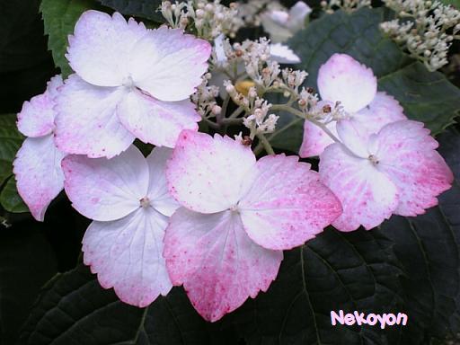 blogkamakura5.JPG