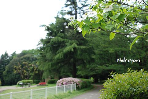 blogkinuta4-28.JPG