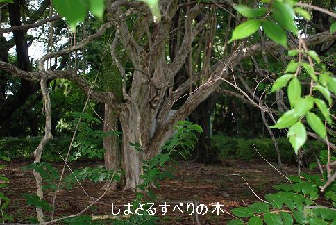 blogkinuta7-10.JPG