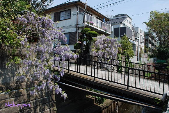 blogmaruko20.jpg