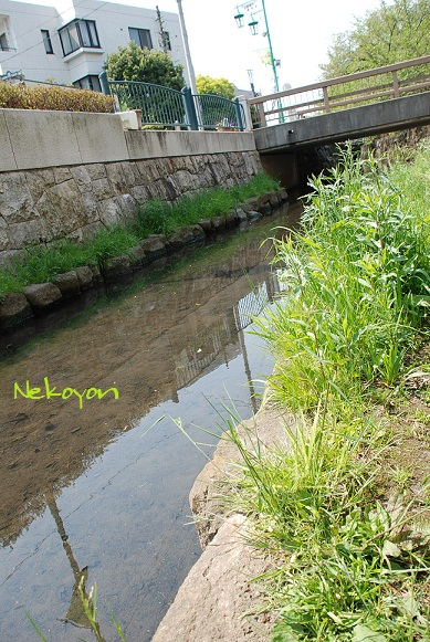 blogmaruko38.jpg