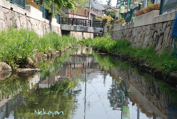 blogmaruko39.jpg