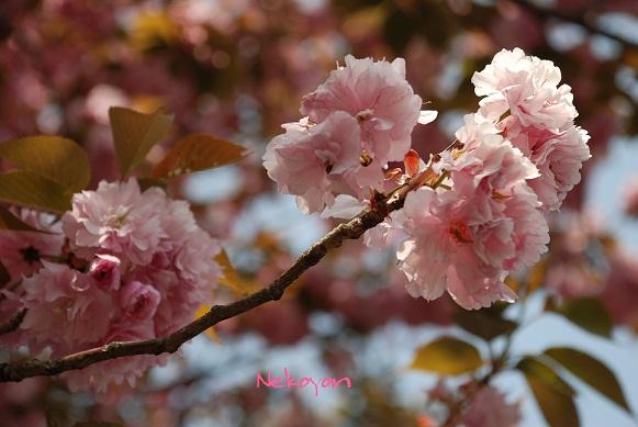 blogmaruko5.jpg