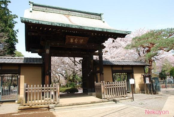 blogsakura10-1.jpg