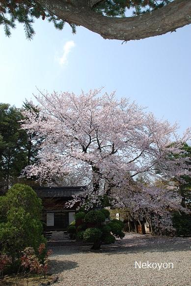 blogsakura10-14.jpg