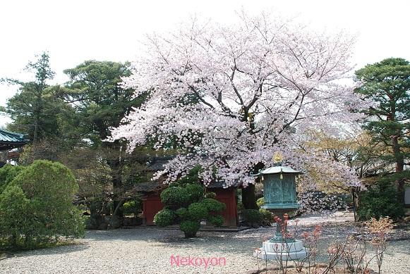 blogsakura10-15.jpg