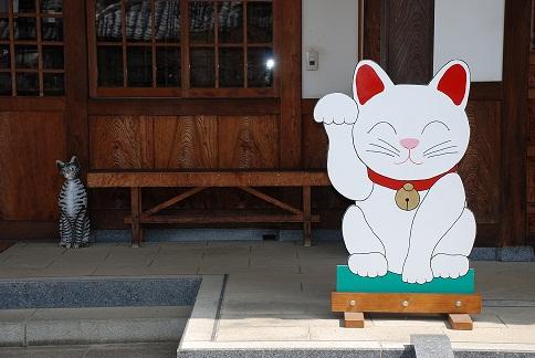 blogsakura10-18.jpg