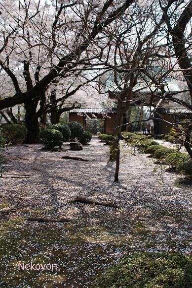 blogsakura10-21.jpg
