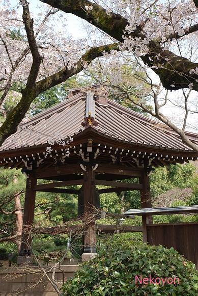 blogsakura10-3.jpg