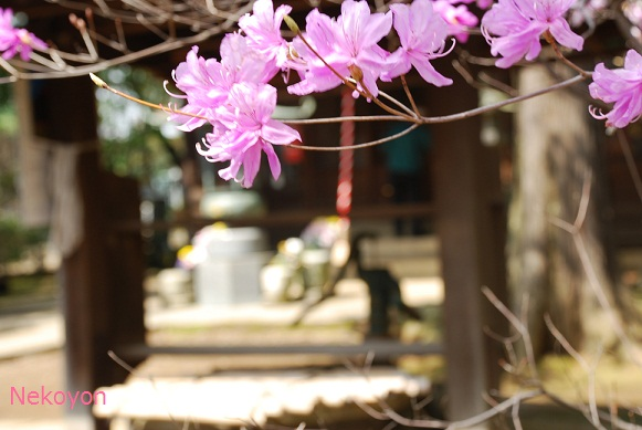 blogsakura10-7.jpg