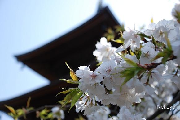 blogsakura10-9.jpg