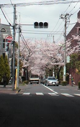 blogsakura19.jpg