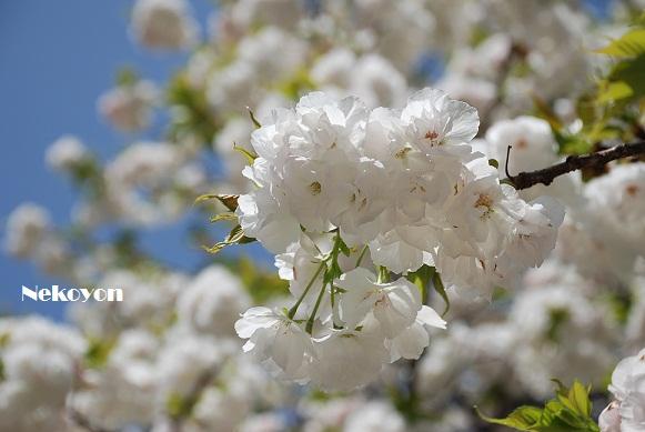 blogspring4.jpg