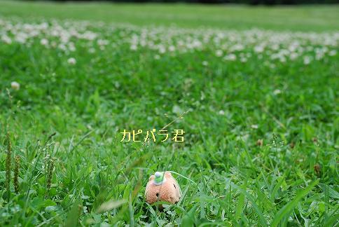 blog422-10.JPG