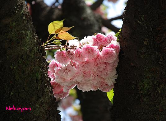 blogkinuta4-3.JPG