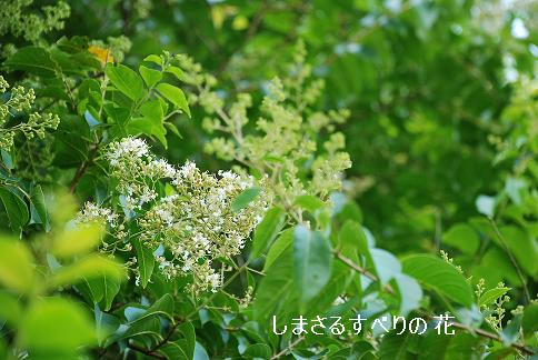 blogkinuta7-9.JPG