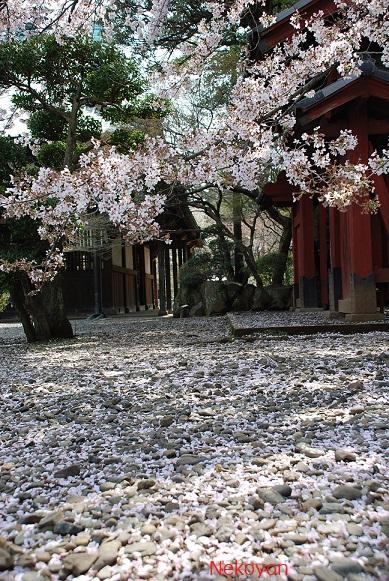 blogsakura10-16.jpg