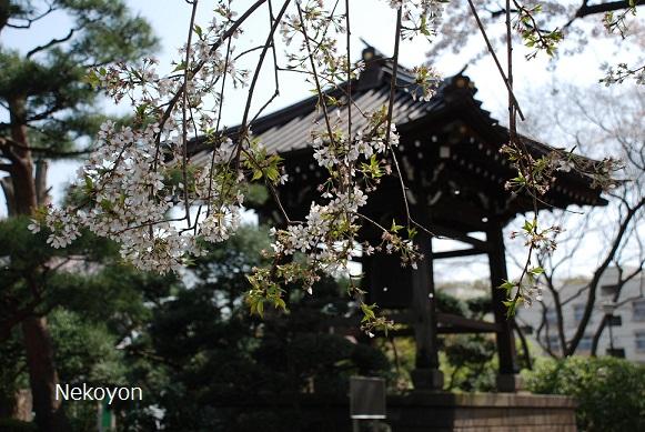blogsakura10-20.jpg