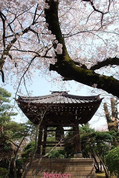 blogsakura10-5.jpg