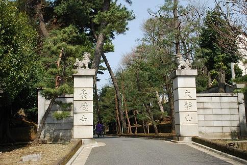blogsakura10.jpg